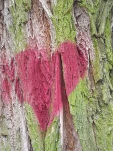 Coeur sur tronc fendu Karim TATAI  Exposition K Love