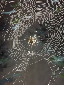 Toile d'araignée exposition photographie autiste artiste karim TATAI Strasbourg