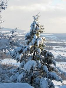sapin-neige-paysage-Haut-Barr-Karim-TATAI-Strasbourg