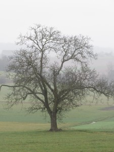 arbre-brume-karim-tatai-Strasbourg