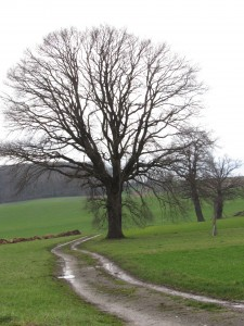 arbre-fevrier-2-Karim-TATAI-Strasbourg