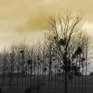 arbres-Karim-TATAI-Strasbourg