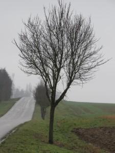 bord-route-Karim-TATAI-Strasbourg