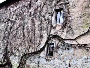 mur en hiver-Karim-TATAI-Strasbourg