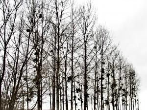rangee-arbre-Karim-TATAI-Strasbourg