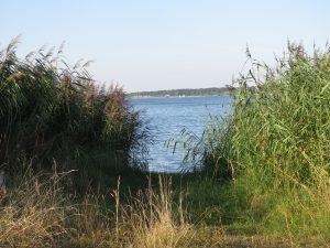 Le Lac de Der au mois d'août CP Karim TATAI