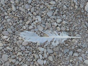 Qui a perdu sa plume ? CP Karim TATAI
