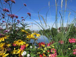 fleurs aux pont de l'Ill à la Wantzenau près de Strasbourg
