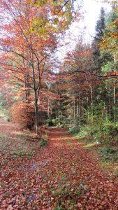 chemin en automne, St Dié 2016 Karim TATAI strasbourg
