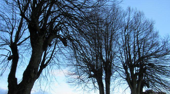 arbres-haut-barr-11-2015-karim-tatai-strasbourg