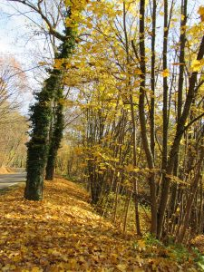 bord-route-11-2016-Karim-Tatai-Strasbourg