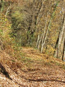 chemin-automne-11-2016-Karim-Tatai-Strasbourg