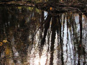 Reflets d'automne karim TATAI Strasbourg