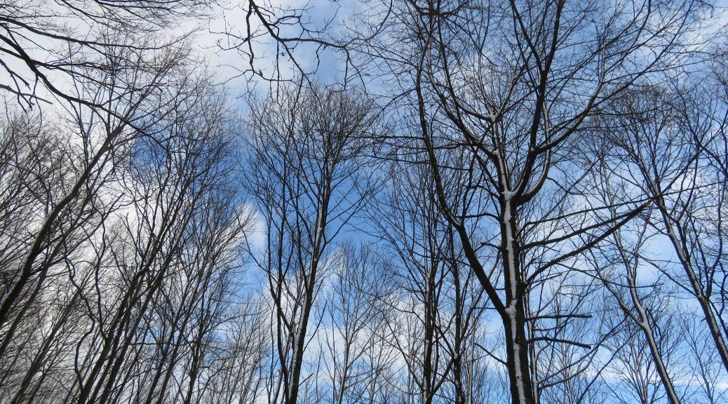 ciel d'hiver en forêt Karim TATAI strasbourg