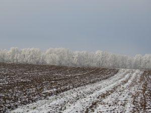 un peu de neige saupoudrée Karim TATAI Strasbourg