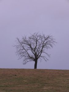 arbre en février Karim TATAI Strasbourg