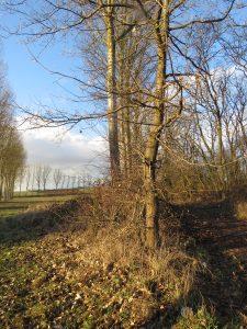 Rangée d'arbres dans le Kochersberg Karim TATAI Strasbourg