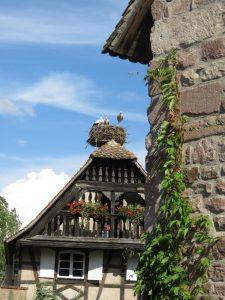 Nid de cigognes à l'Ecomusée d'Alsace