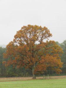 arbre en automne, Karim TATAI 2016 strasbourg