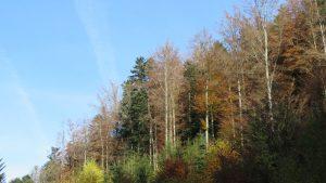 forêt en automne, Karim TATAI-Strasbourg 2016