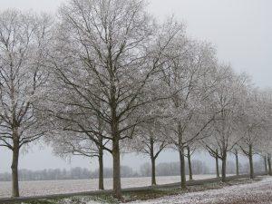 Arbres, bord de route en hiver Karim TATAI Strasbourg