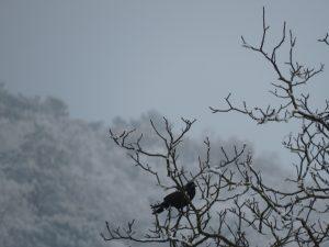 corbeau dans la neige, Karim-TATAI-Strasbourg