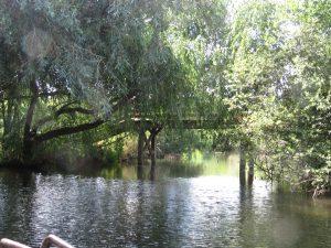 riviere-ecomusee-Alsace-Karim-TATAI-Strasbourg