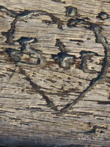 Cœur gravé sur un arbre Karim TATAI Le gardien des coeurs