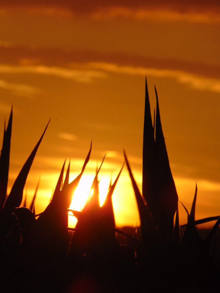 maïs-coucher-soleil-Karim-TATAI-juillet-2018